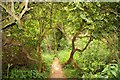 SP5605 : Trail through the trees in Shotover Country Park by Steve Daniels