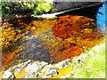 NC9121 : Stream Bed : Week 22