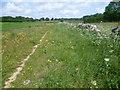 TF0703 : The Hereward Way near Southorpe by Marathon