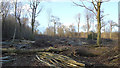 TL8727 : Clearing the woodland, Chalkney Wood by Roger Jones