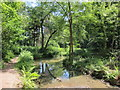 TQ8109 : Pond in Summerfields Woods by Oast House Archive