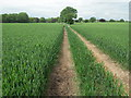 SJ8373 : Public Footpath to Astle Farm by marplerambler