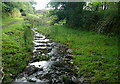 SX5183 : Brook at Watervale by Graham Horn