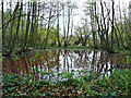 TL9336 : Pond in Spouse's Grove by Roger Jones