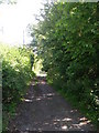 SE2329 : Old Lane - leading to New Lane by Betty Longbottom