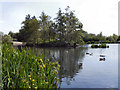 SJ9599 : The Upper Lake, Stamford Park by David Dixon