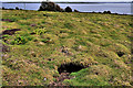 J5985 : Rabbit burrows, Lighthouse Island by Albert Bridge