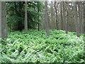 NT7247 : Cairn in South Piersknowe Plantation : Week 24