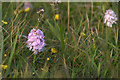 HP5706 : Heath Spotted Orchids (Dactylorhiza maculata), Westing by Mike Pennington