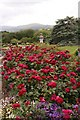 SH7972 : The Upper Rose Terrace at Bodnant Garden by Jeff Buck