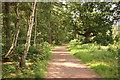 SK6171 : Dukeries Trail by Richard Croft