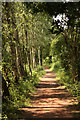 SK6071 : Dukeries Trail by Richard Croft