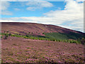 NJ4708 : Flowering heather on south-east slope of Broom Hill by Trevor Littlewood