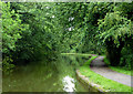 SJ8741 : Trent and Mersey Canal near Trentham, Stoke-on-Trent by Roger  Kidd