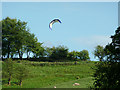 Dist:0.4km<br/>On the hillside south-south-east of Cheddleton Top Lock a few sheep were grazing on this fine early summer evening, and a rather magnificent kite (not a bird)  was swooping and soaring and hovering in fine style.
