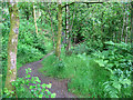 NY2824 : Footpath in Brundholme Wood by Stephen Craven