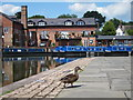 SP7287 : Duck at Market Harborough Union Wharf by Oast House Archive