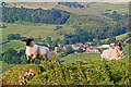 SK0767 : Sheep on Chrome Hill by Ian Capper
