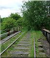 SJ9050 : Disused railway near Milton, Stoke-on-Trent by Roger  Kidd