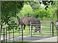 TL9217 : Horse and cattle grid, Layer Marney by nick macneill