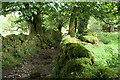 SX6673 : Dartmoor Forest: path to Dartmeet by Martin Bodman
