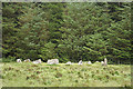 SX6778 : Widecombe in the Moor: Soussons stone circle by Martin Bodman