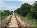 TQ9322 : Marshlink line towards Appledore by David Anstiss