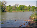 SK6274 : Clumber Lake by Trevor Rickard