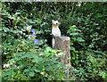 SJ3768 : Bloody meercats get everywhere by Tim Evans