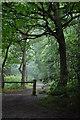 TQ8391 : Bridle Path : Week 29
