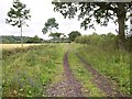 ST9281 : Bridleway to Rodbourne by Derek Harper