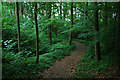 SJ6000 : Path through the woods on Harley Hill by David Lally