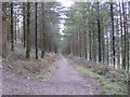 SX2465 : Track through High Wood Forest by Eric Foster