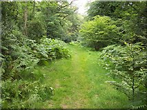 SU8497 : Footpath on Naphill Common by michael