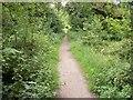 SU8496 : Public Bridleway on Naphill Common by michael