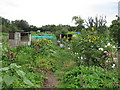 TQ4187 : Empress Avenue Allotments by Roger Jones