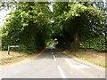 SJ7456 : Kents Green Lane by Alexander P Kapp