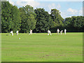 TQ4459 : Cudham cricket pitch by Stephen Craven