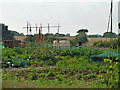 TQ4156 : Allotments, Tatsfield by Robin Webster