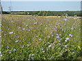 TQ4662 : Flax Field in Charnwood Farm by David Anstiss