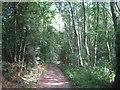 TQ4561 : Bridleway in Foxberry Wood by David Anstiss