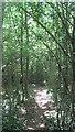 TQ4865 : Footpath in Black Bush Wood by David Anstiss