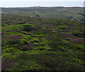 SW3523 : Heather on Higher Bosistow Cliffs by Graham Horn