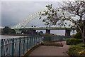 SJ5183 : That tree is half as big as the Runcorn Bridge by Ian Greig