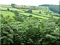 SO3276 : Bracken-filled hedge near The Quern by Christine Johnstone