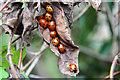 SK8770 : Ladybirds : Week 33