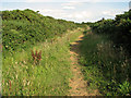 TG0242 : Footpath to Wiveton Downs by Evelyn Simak