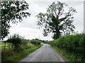 SO5577 : Roadside tree on the lane to Henley by Christine Johnstone