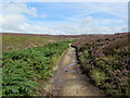 SE0758 : Track to Simon's Seat by Chris Heaton