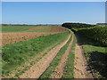 TL6054 : Icknield Way by Hugh Venables